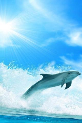 Скачать 3D дельфины HD Live Wallpaper для Андроид
