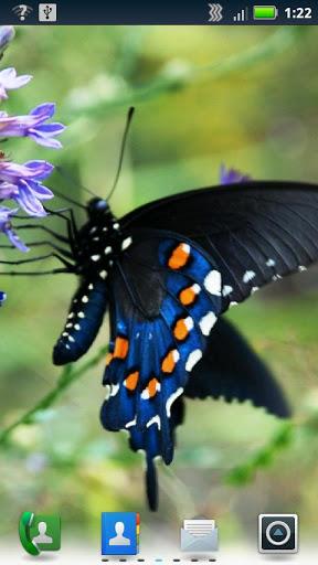 Скачать Бабочки Живые обои / Butterflies Live Wallpaper для Андроид