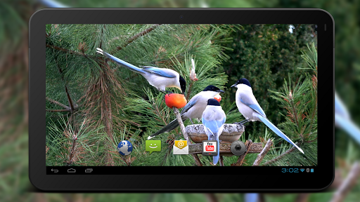 Скачать Birds Live Wallpaper для Андроид