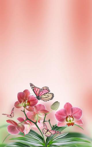 Скачать Butterfly LWP / Бабочки — живые обои для Андроид