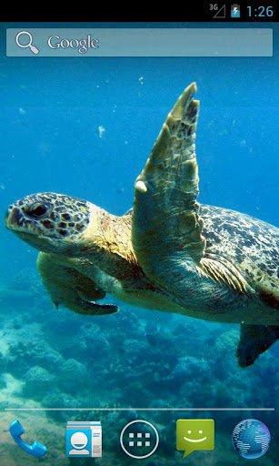 Скачать Море жизни HD / Sea life HD для Андроид