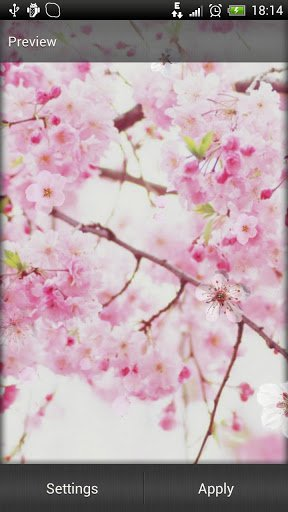 Сакура обои / Sakura Live Wallpaper для Андроид