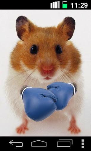 Скачать Смешной Хомяк Треснувший Экран / Funny Hamster Cracked Screen для Андроид